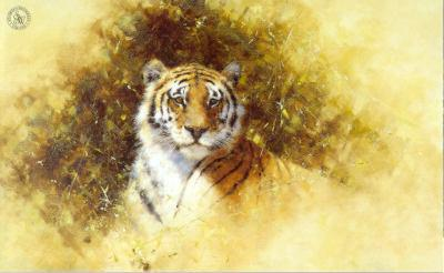Working Sketch for a Painting of a Tiger