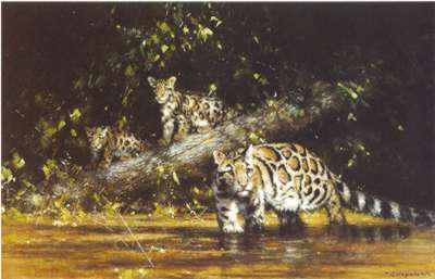 Clouded Leopards & Cubs
